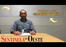 Proagro para a cigarrinha   Leandro Possebon