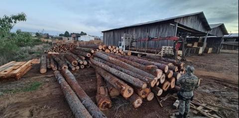 Polícia Ambiental apreende madeira ameaçada de extinção