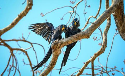Brasil tem 3.299 espécies ameaçadas